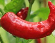 Kapsaicin, který obsahují pálivé papričky chilli, hodně urychluje právě spalování tuků.